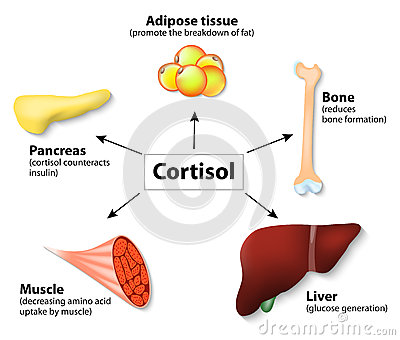 Cortisol and Cycling - The Stress Hormone - I Love Bicycling