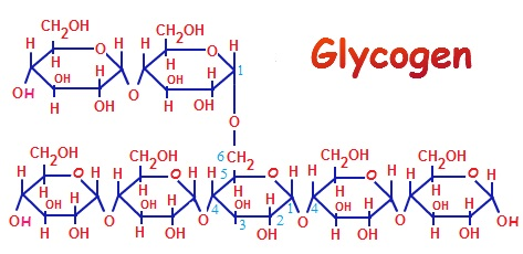 is glycogen a carbohydrate