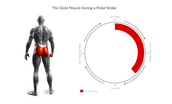 Pain in the Ass: Why You Shouldn't Ignore Your Glutes